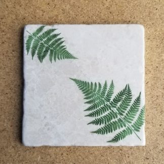 Image of Fern Coaster